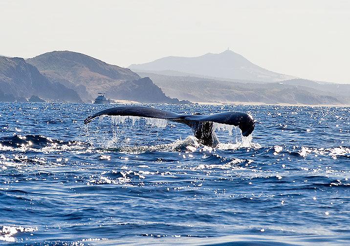 Whale by Jon